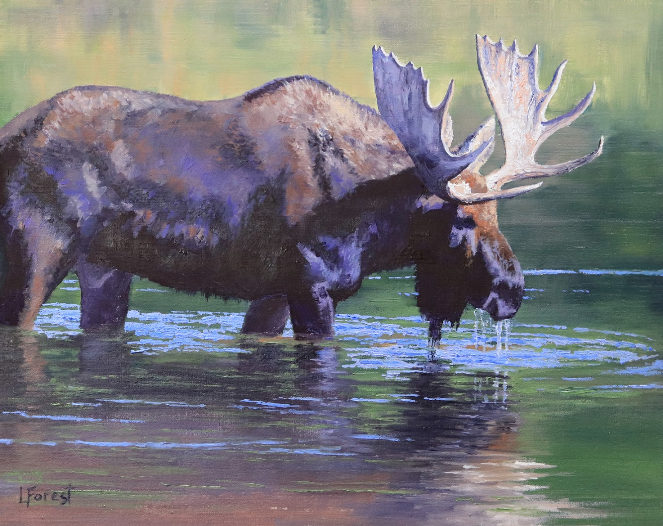 Moose Shallows - 8 x 10 - oil on linen board